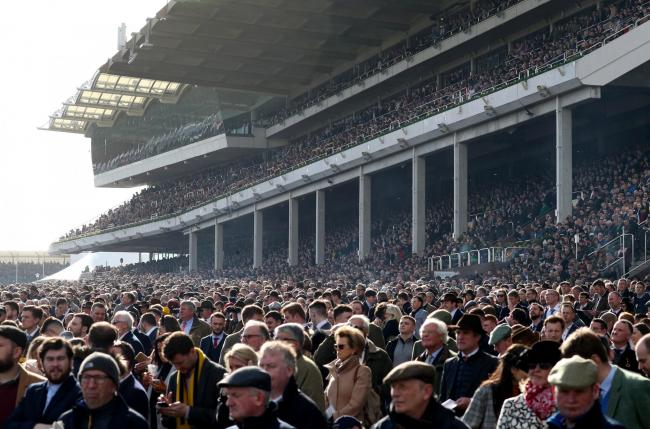 Public health experts are calling for an investigation into this year's Cheltenham Festival