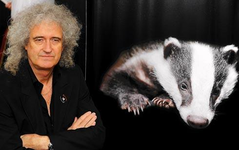 Queen guitarist Brian May slams government proposals for badger cull