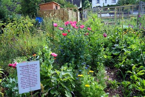 Gardener Amanda Godber's allotment in Thrupp is one of 40 sites across the Five Valleys visitors can browse next month as part of Transition Stroud's Edible Open Gardens weekends