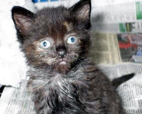 A tiny kitten was abandoned on the doorstep of the RSPCA shop