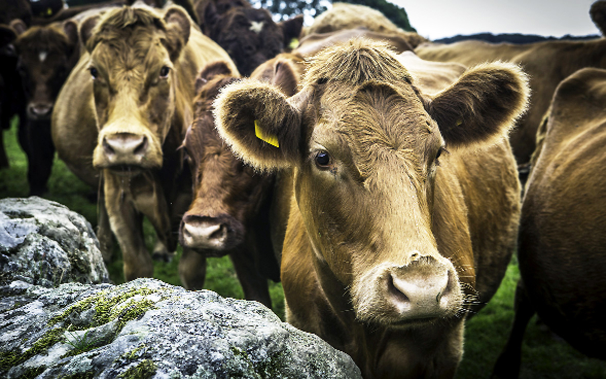 Farmers face heavy bill after cattle take flight