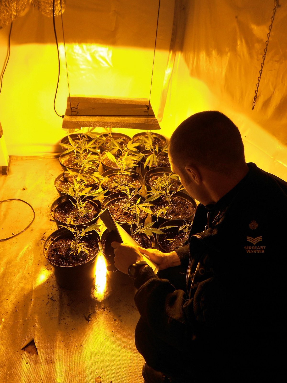 Cannabis factory discovered in rented Chipping Sodbury house