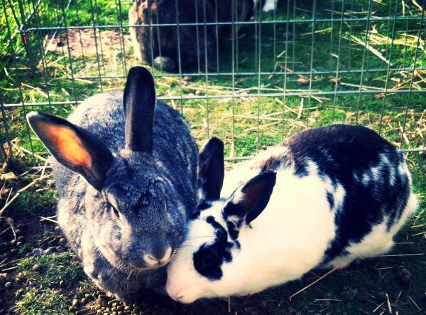 Bono the rabbit and his second wife Skittle are in need of a permanent home. The pair are currently living with their foster carer's Lyndsey and Mark Barnett in Stroud and are in need of a family who will take them both