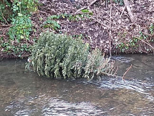 'Shameful' disposal of Christmas tree