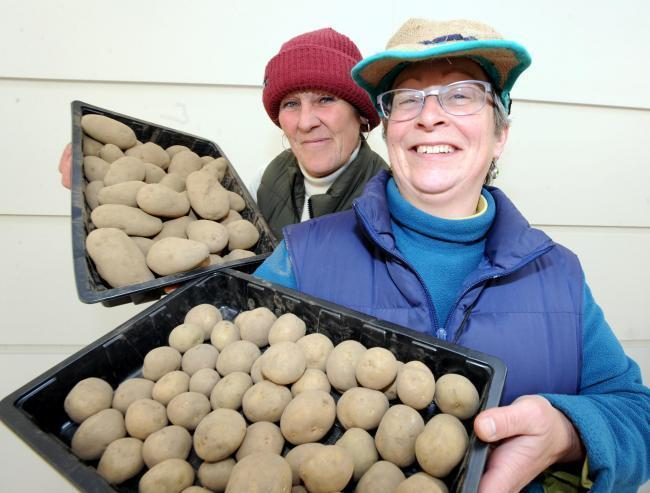 Ninth annual potato day hailed as success