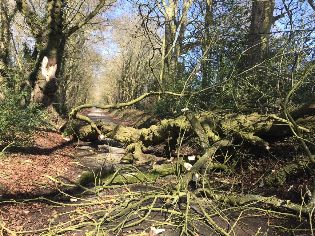 Over the weekend Cllr Jenny Forde came across this large tree blocking a major road in the Cotswolds